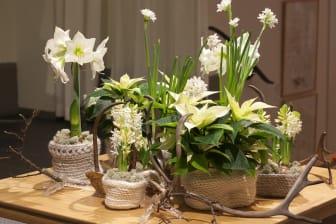 Norrländskt stilleben med julens blommor