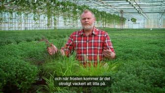 Trädgårdsmästaren_tipsar_prydnadsgräs_16x9.mp4