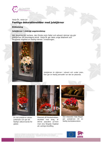 Festliga dekorationer med julstjärnor