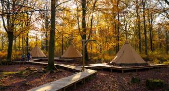 Camp Oak - övernatta mitt i höstmyset