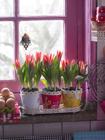 Röda tulpaner på rad