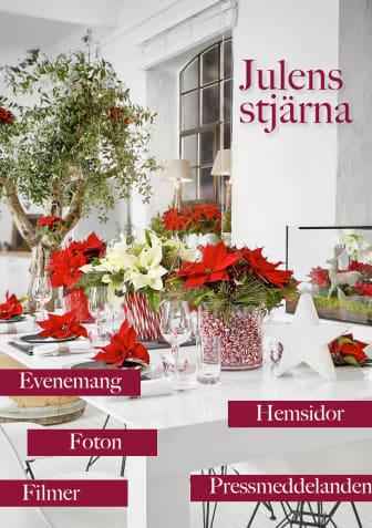 Julens stjärna - material 2015