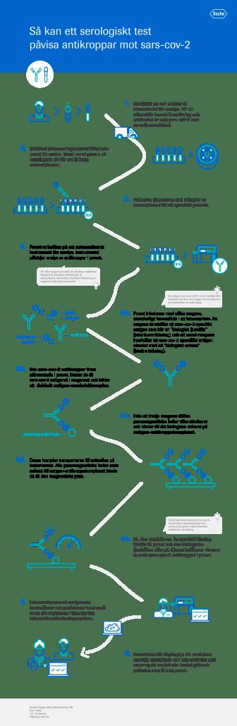 Infografik: Så kan ett serologiskt test påvisa antikroppar mot sars-cov-2