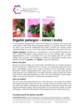 Engelsk pelargon – kärlek i kruka