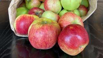 Æble-årsferie