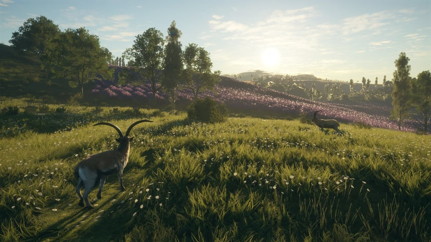 11CC-Ibex_field_of_flowers_1920x1080.png