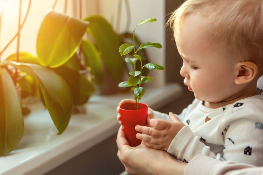 Lapsi ja kasvi.jpg