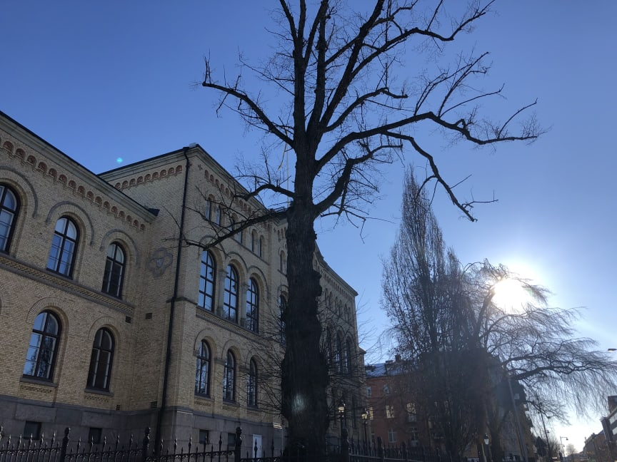Trädet 2.jpeg