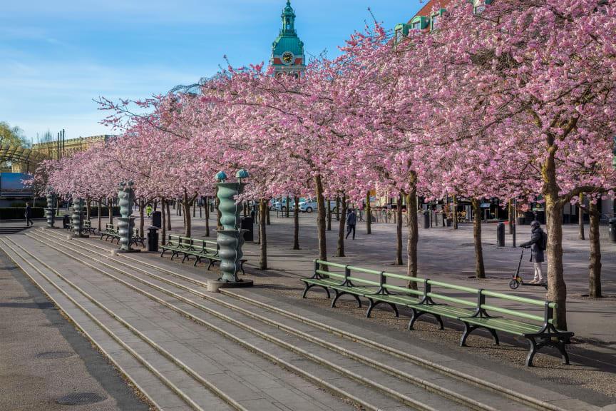 Nola's backed benches in Kungsträdgården in Stockholm.