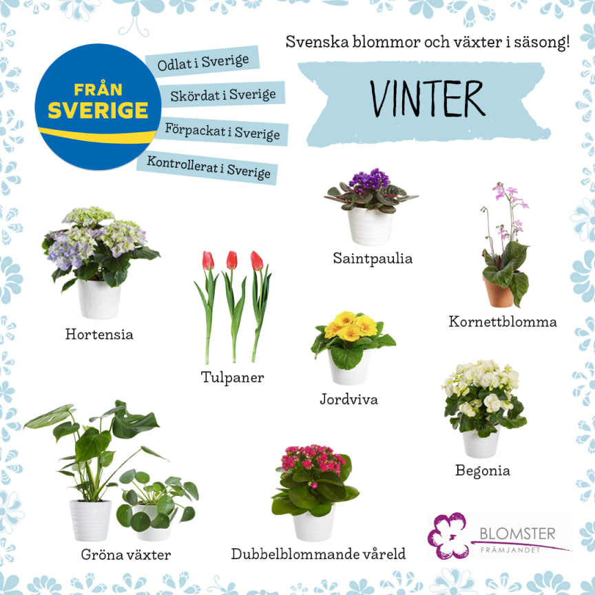 Säsong_blommorväxter_vinter_final