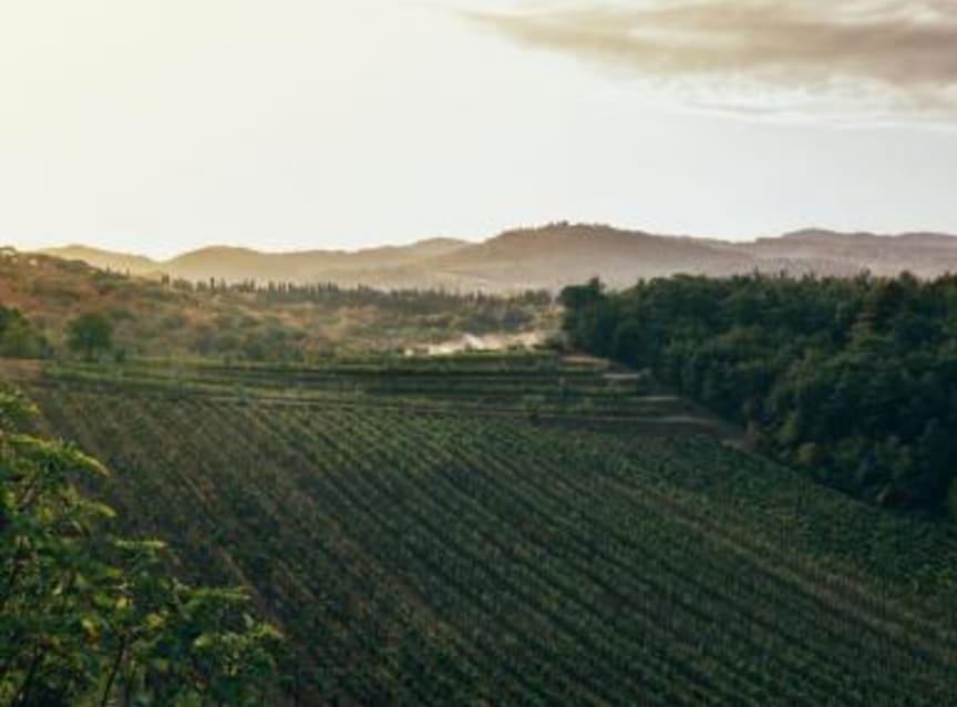 vinfält