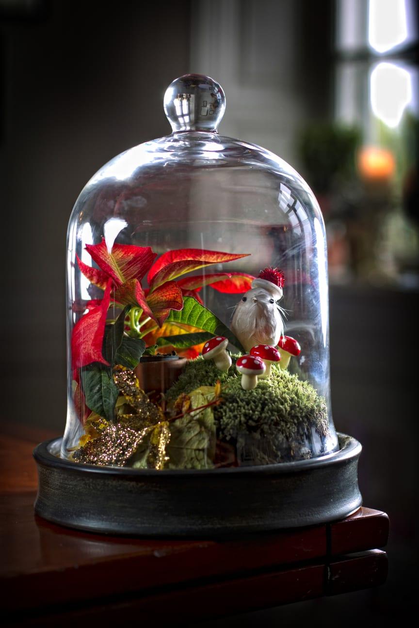 Julstjärna i glas 2012