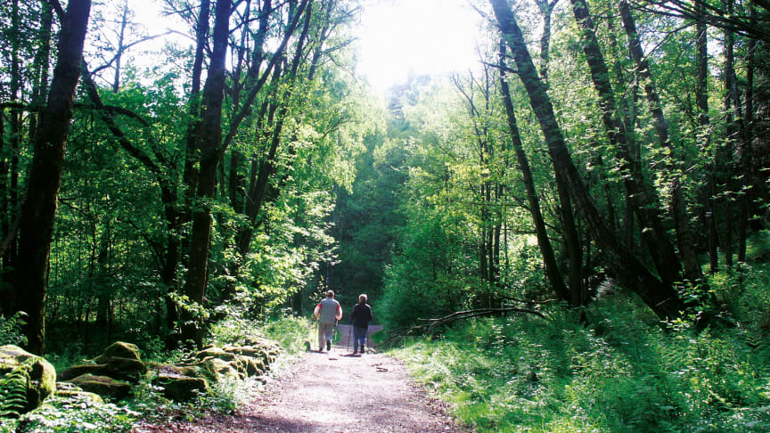 Fjällbo park ligger naturskönt med många härliga naturupplevelser och promenadspår.