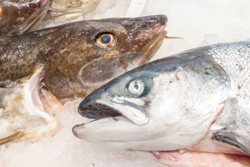 Spansk fiskedisk
