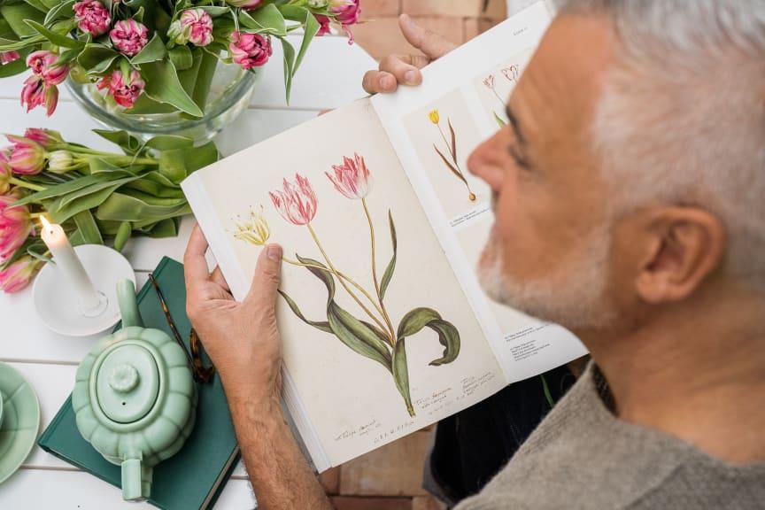 Ernst och svenskodlade tulpaner