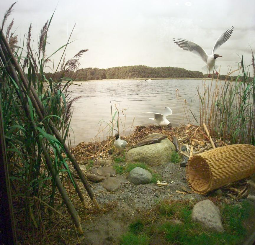Fjorden lille fil