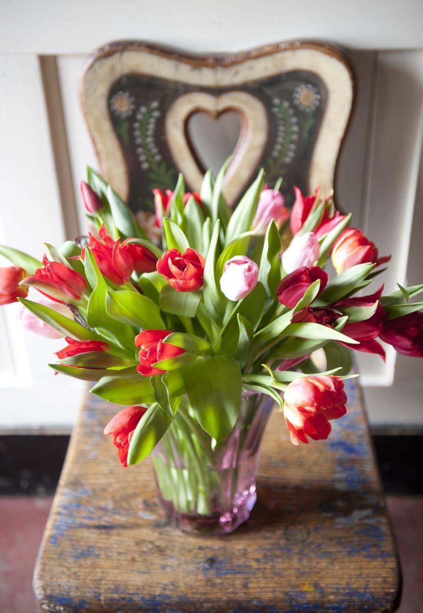 Tulpanbukett i rött och rosa