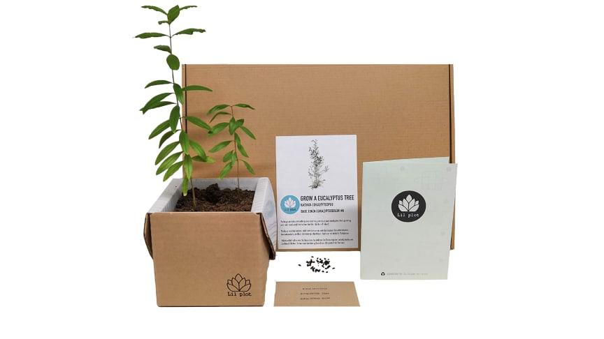 Trädkit, eukalyptus