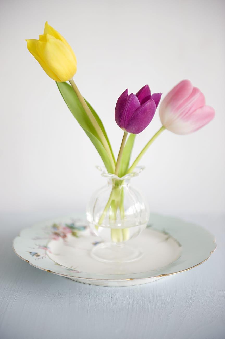 Tulpaner i litet glas.