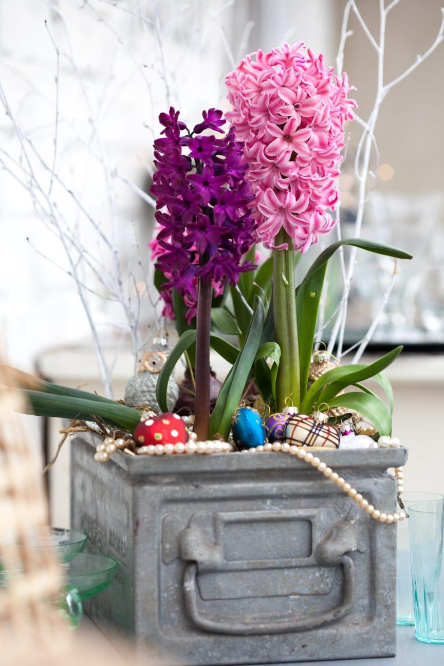 Modern julgrupp med hyacinter
