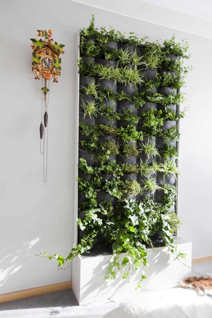 Framtidslägenheten, växtvägg