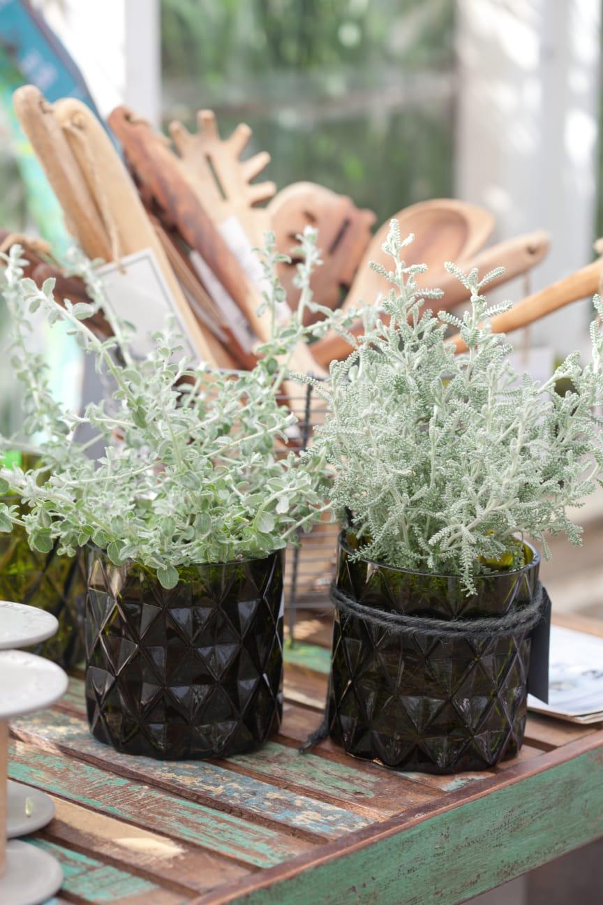 Silverfärgade växter i lyktor