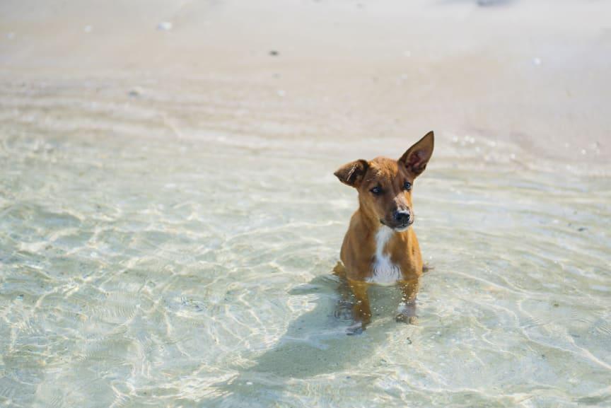 Hit drömmer hunden om att få resa_2