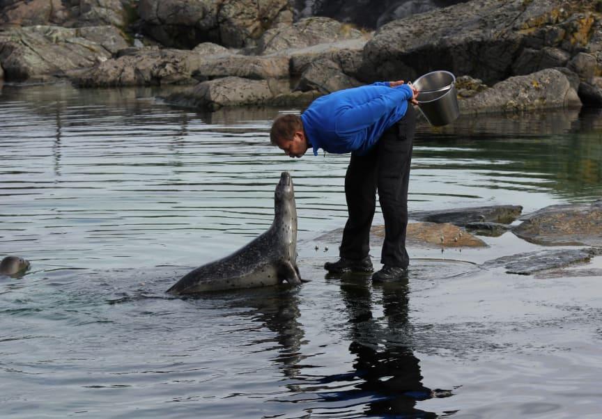 selforing-av-knut-foto-atlanterhavsparken.jpg