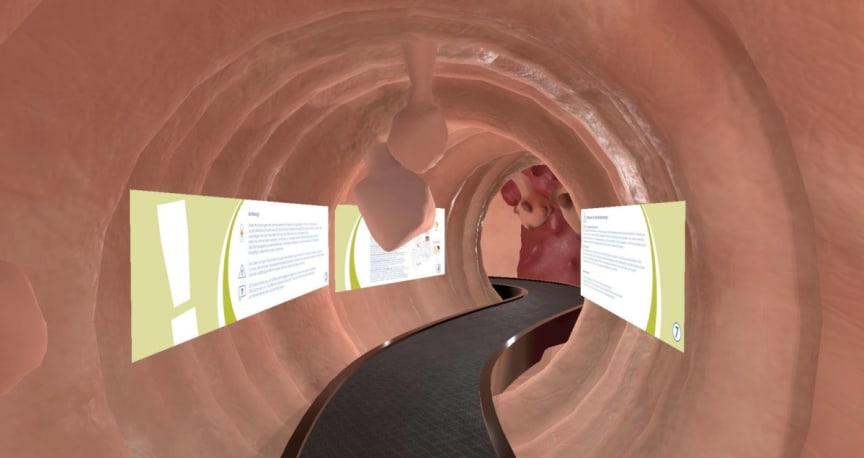 Blick in das VR-Darmmodell
