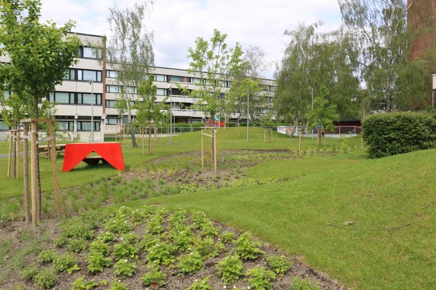 Frukthagen på Kringsjå Studentby