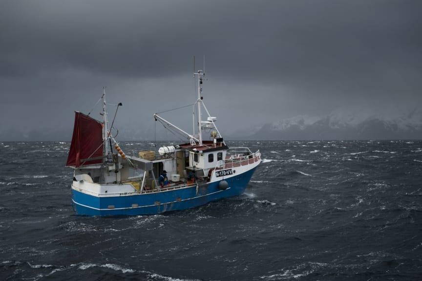 Båt, torsk
