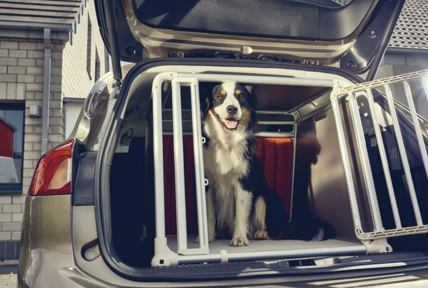 Stort hundehus i Ford Focus stationcar