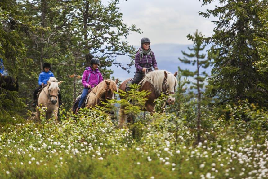 Høsttur på hesteryggen