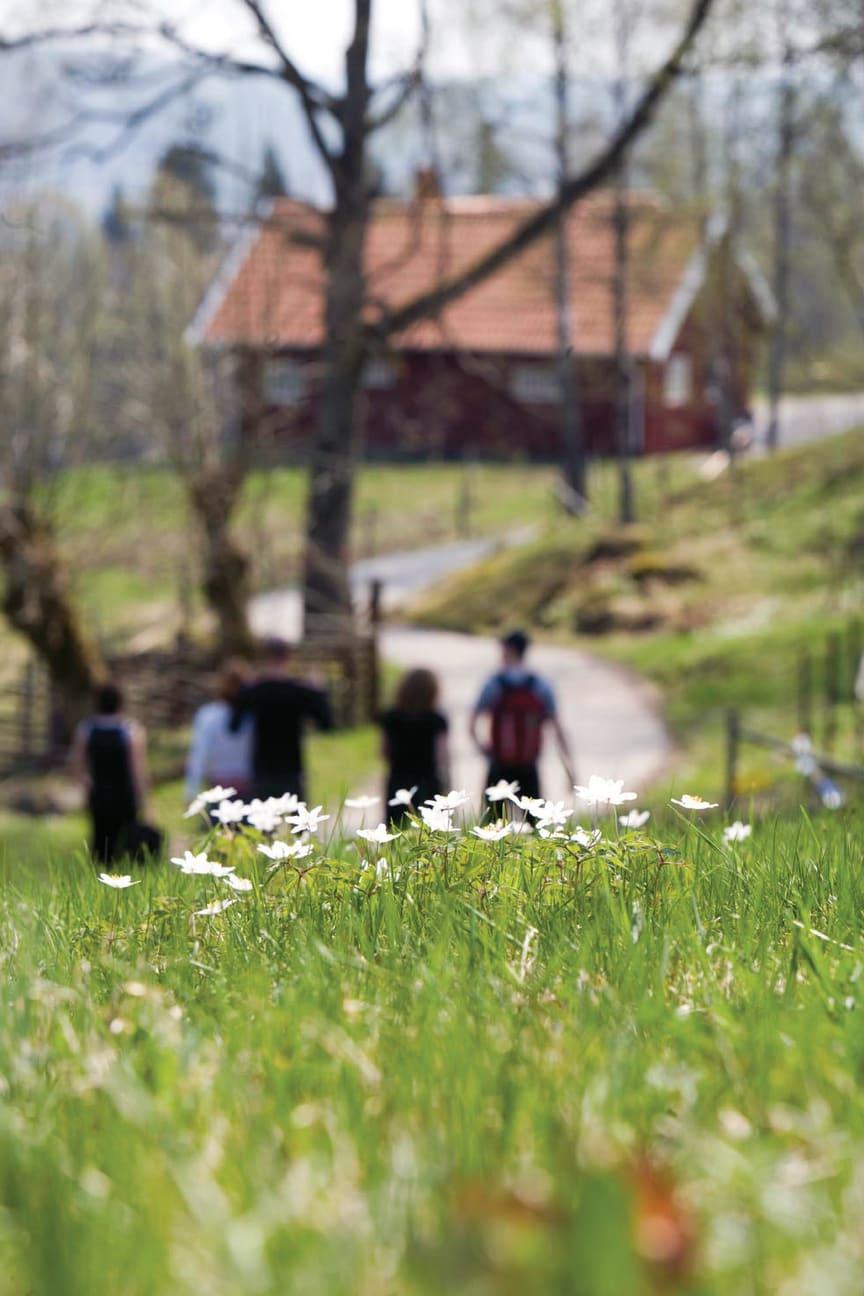 Linnémarschen