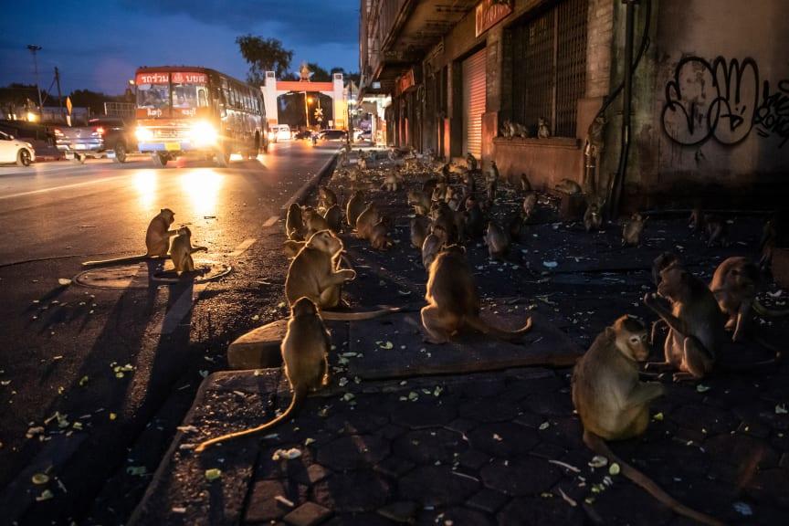 © Joan de la Malla, Spain, Shortlist, Professional competition, Natural World & Wildlife, 2020 Sony World Photography Awards (3)