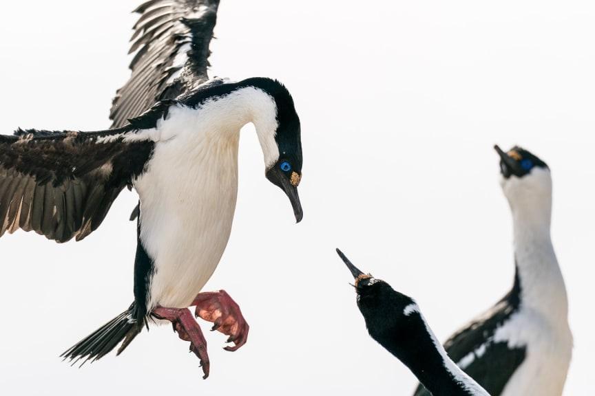 2 birds playing