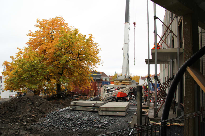 Det store løvtreet på byggeplassen har så langt blitt bevart.