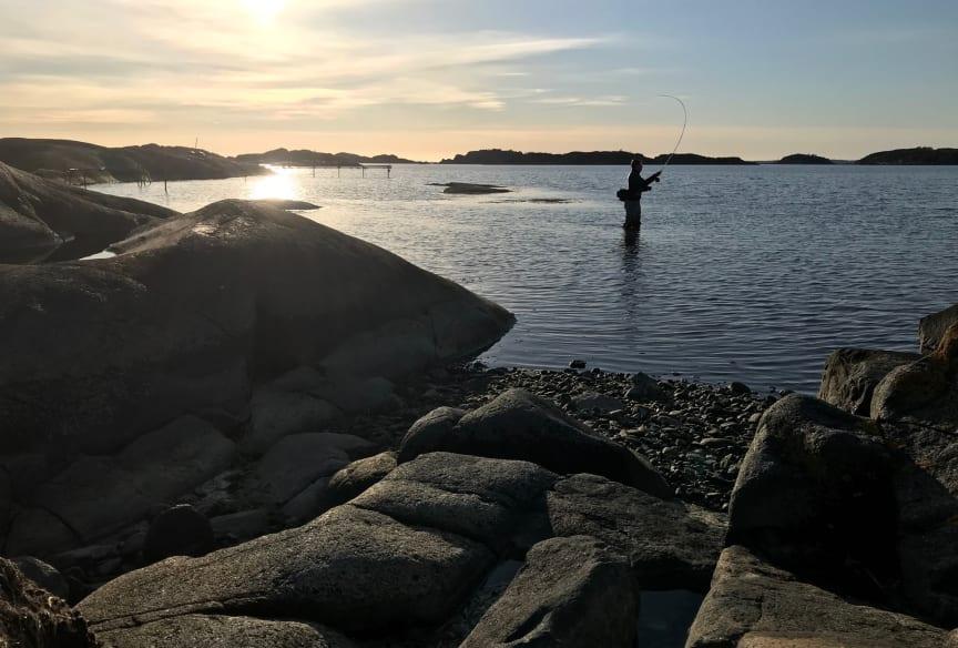 fritidsfiske-i-kvallssol-billdal--gustav-enhol-blomqvist-stor.jpg