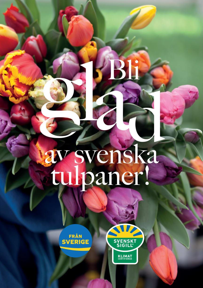 Bli glad av svenska tulpaner 2021 - A1 poster för egen utskrift