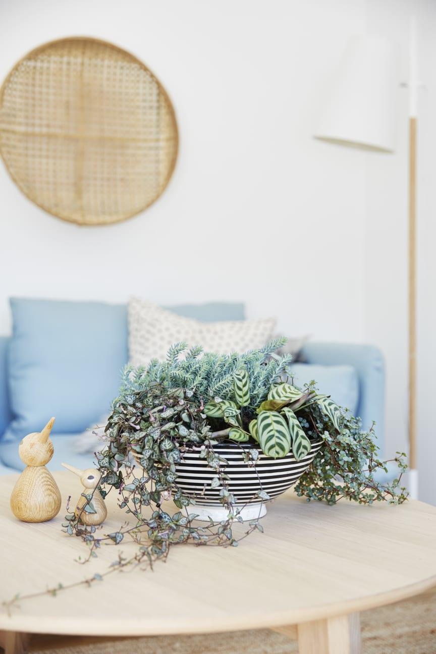 Gröna växter på soffbordet.