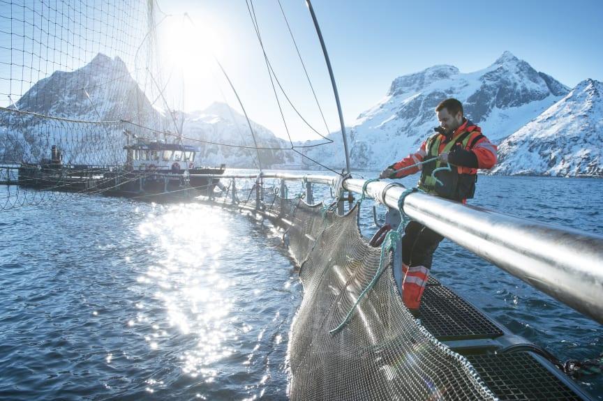 Salmon farmer in Norway