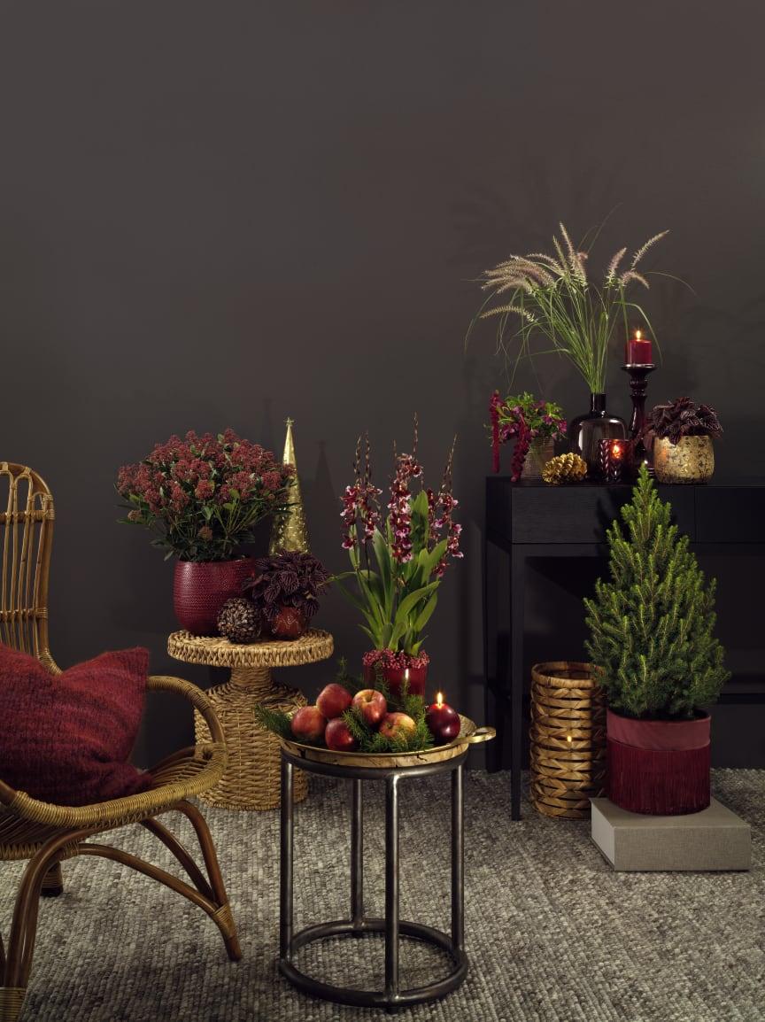 Interfloras julkollektion - stående