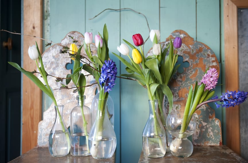 Blomsterlöksglädje