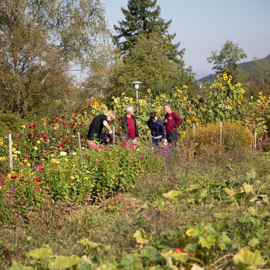 Living Farms Goetheanum Gartenpark Garden Park Blumen Flowers_Jasmin Peschke