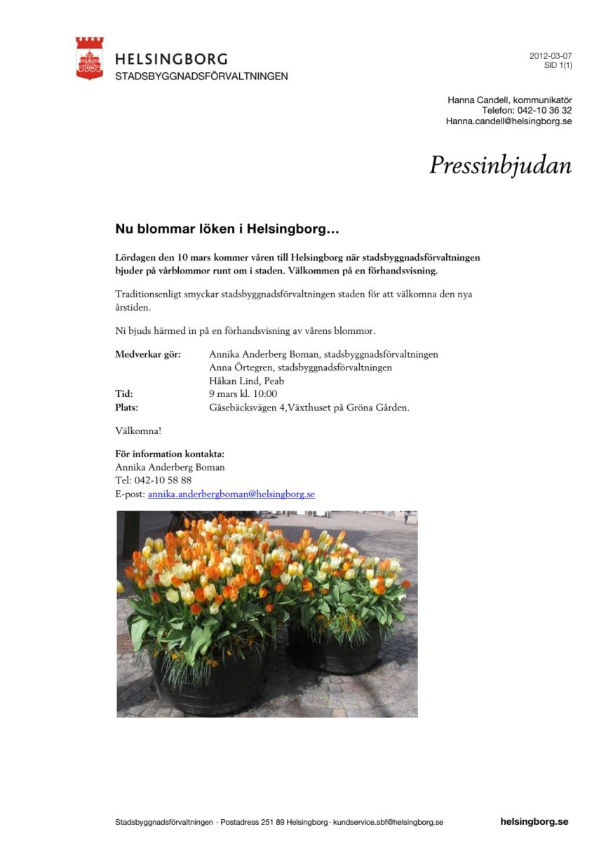 Pressinbjudan: Nu blommar löken i Helsingborg…