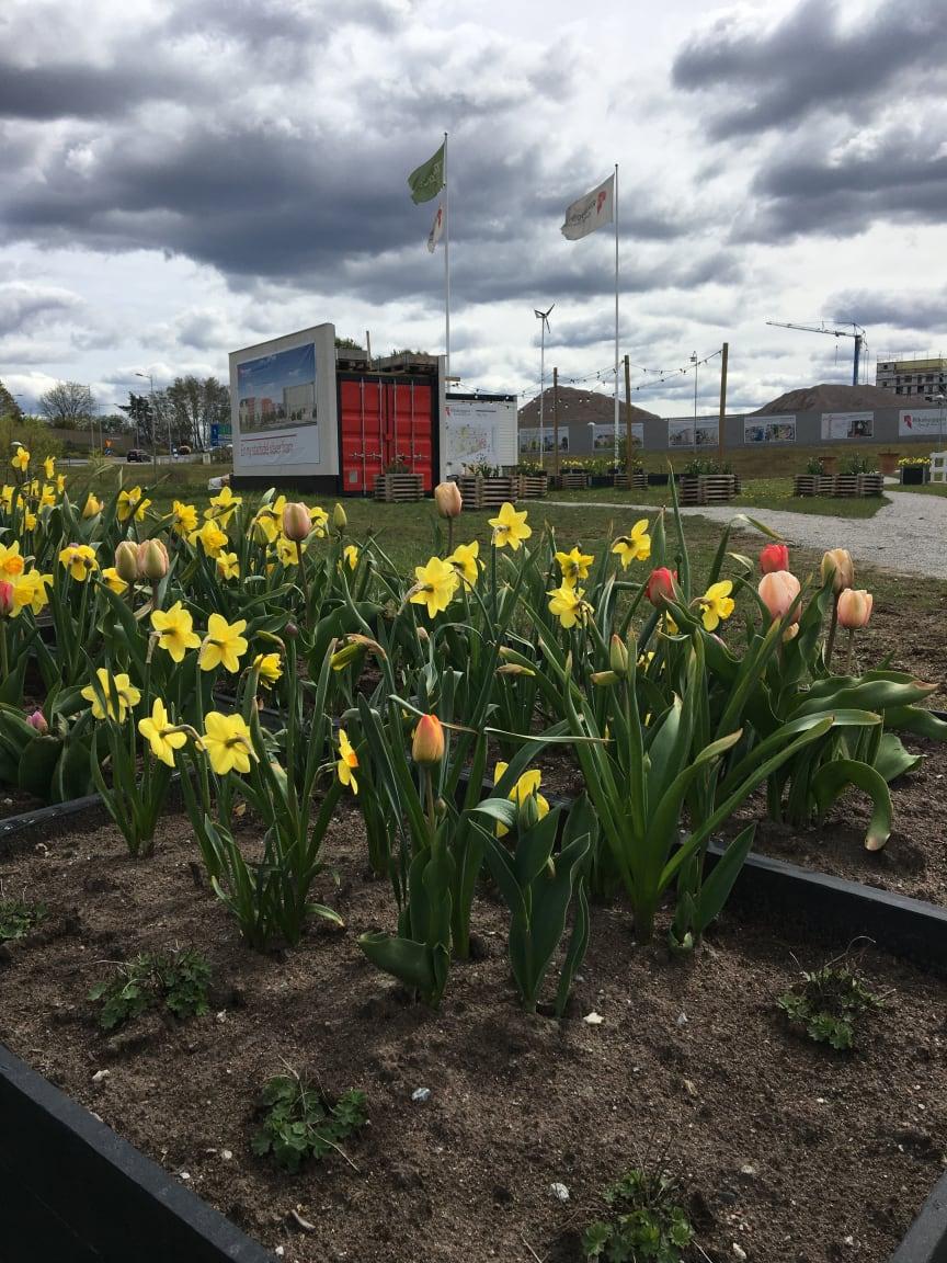 Riksbyggens pop-up trädgård i Täby Park