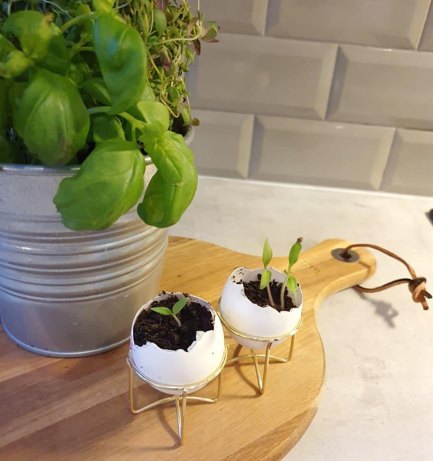 Påsk: odla i ägg