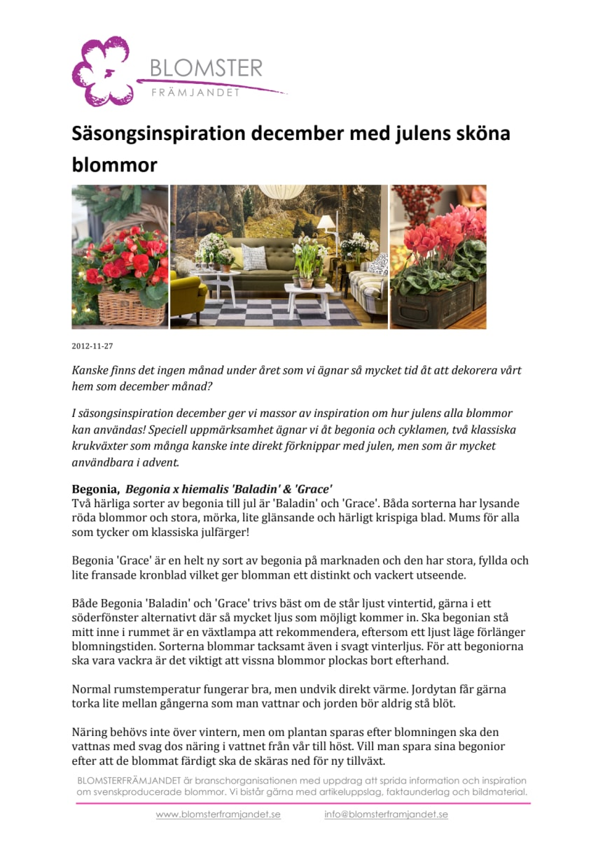 Säsongsinspiration december med julens sköna blommor