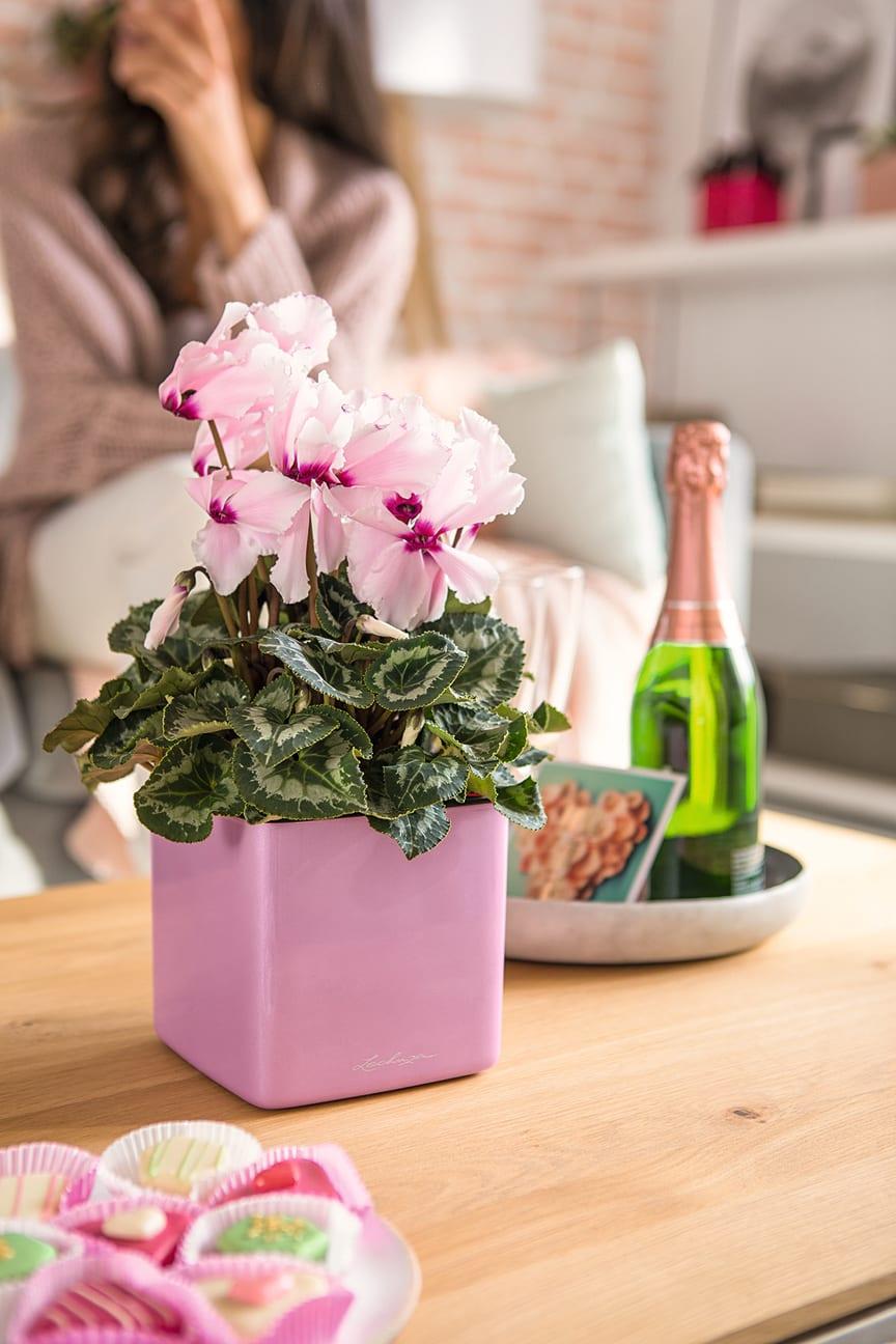Holt die Frühlingsgefühle auf den Tisch: CUBE Glossy Kiss