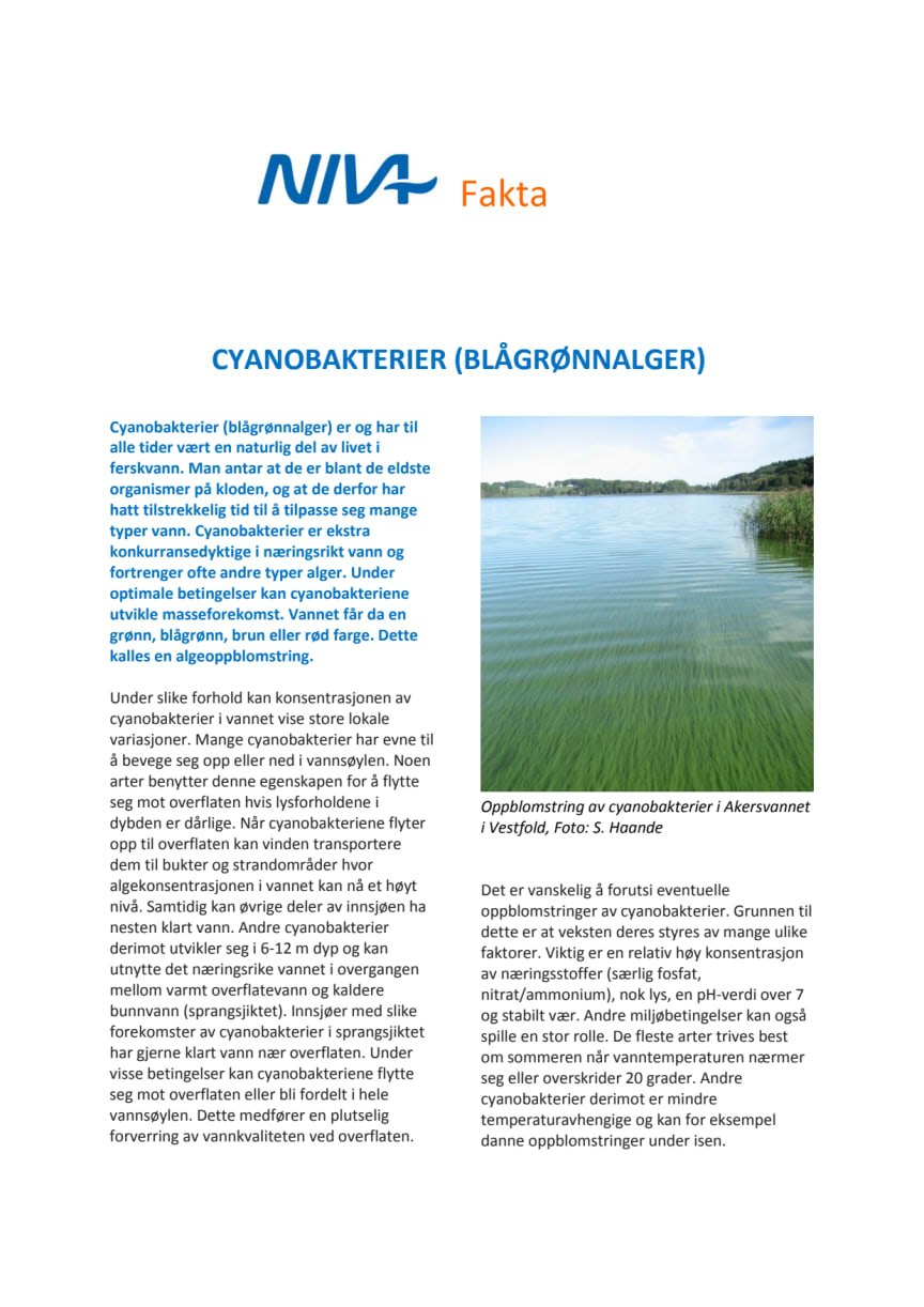 Hva er cyanobakterier?